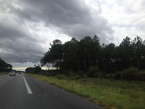 La forêt landaise est constituée de pins