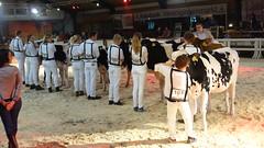Midsummer Dairy Show