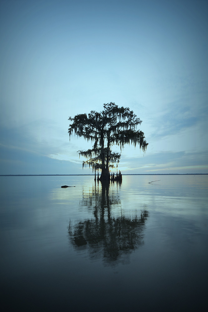 Tree Cypress Louisiana Autumn