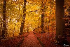 Sanspareil im Herbst-11