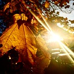 """Good morning Stockholm!  The sun is shining. Have a good day today! #Stockholm #sun #autumn #awesomepicture #Blackeberg #filter #z5compact #Sony #morning #morgon #vackertväder #weather #feelgood <a style=""""margin-left:10px; font-size:0.8em;"""" href=""""http://www.flickr.com/photos/131645797@N05/21863156833/"""" target=""""_blank"""">@flickr</a>"""