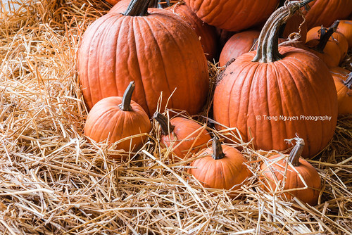 """Pumpkin family • <a style=""""font-size:0.8em;"""" href=""""http://www.flickr.com/photos/132142211@N05/29395357603/"""" target=""""_blank"""">View on Flickr</a>"""