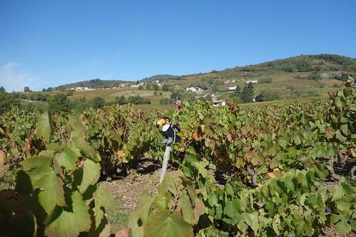 Nous voilà dans le Beaujolais en ce week end du 4 octobre !