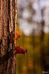 Herbst an der Saaleschleife-16