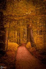 Sanspareil im Herbst-5