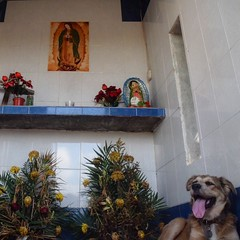 Nothing like a good roadside shrine to rest up. #TheWorldWalk #Mexico #travel #twwphotos #savannahtww