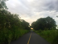 The Road Ahead. Day 193. I'll have a few miles on a peaceful road before getting back on the highway. Slept next to the cattle last night, their groans were reverberating through the silence. #TheWorldWalk #travel #mexico #wwtheroadahead