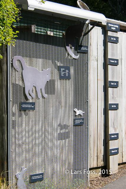 Fence at Zealandia