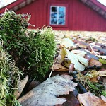 """#closeup #filter #autumn #awesomepicture #countryside #myhometown #nyckelby #mittparadis #myparadise #z5compact #höst <a style=""""margin-left:10px; font-size:0.8em;"""" href=""""http://www.flickr.com/photos/131645797@N05/22277151149/"""" target=""""_blank"""">@flickr</a>"""