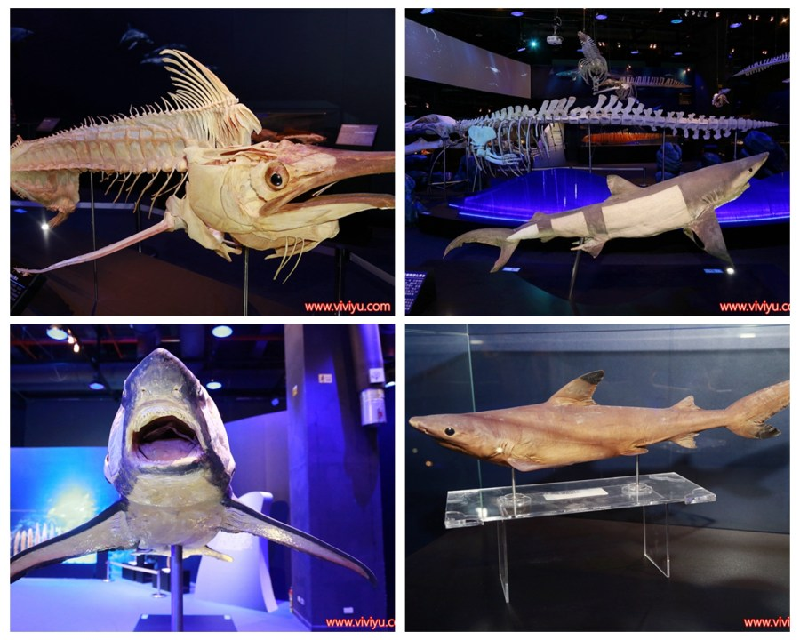 國立臺灣科學教育館,寒假,展覽,模型標本,深海巨怪,科學教育館,顛倒屋特展 @VIVIYU小世界