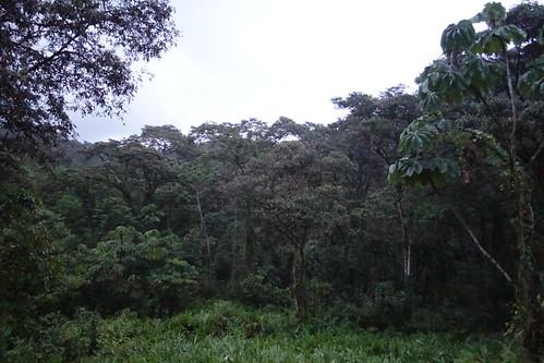 En 4h de trajet, le paysage change, nous rentrons dans la forêt tropicale