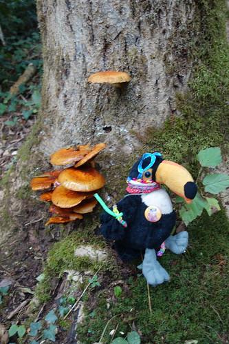 Pelico se retrouve au milieu des champignons !