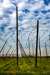 Poperinge - After the crop