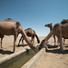 "Maranjab Desert • <a style=""font-size:0.8em;"" href=""http://www.flickr.com/photos/87069632@N00/29824211424/"" target=""_blank"">View on Flickr</a>"