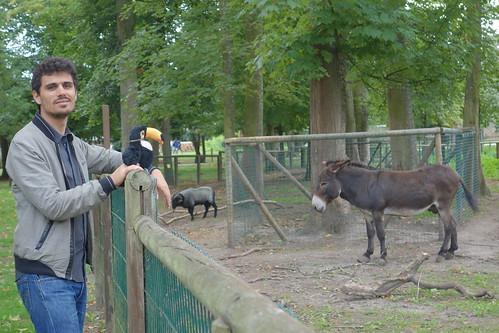 Face à face numéro 2 (qui a dit qu'il y avait plusieurs ânes sur la photo ??)