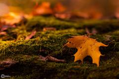 Herbst an der Saaleschleife-1