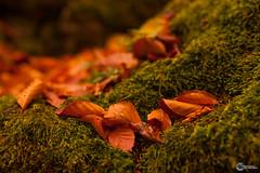 Sanspareil im Herbst-1