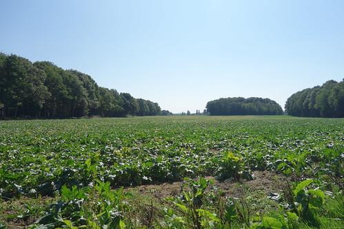 Puis ce sont à nouveau champs et forêts