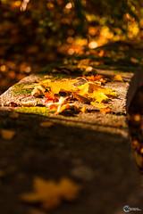 Herbst an der Saaleschleife-5