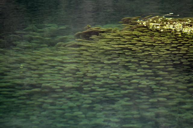 odd algae