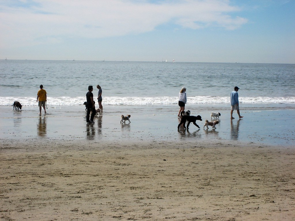 5451324125 f8097b37fe b California's Top Cities for Dog Lovers