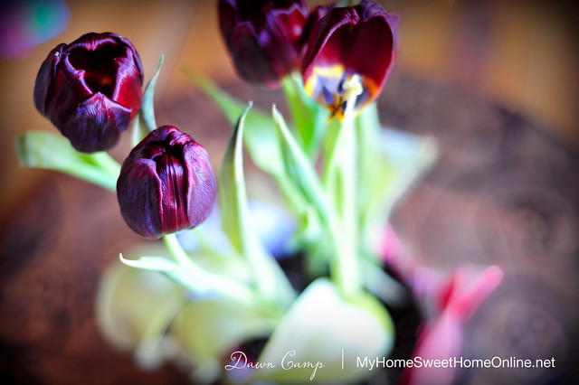 T is for Tulips