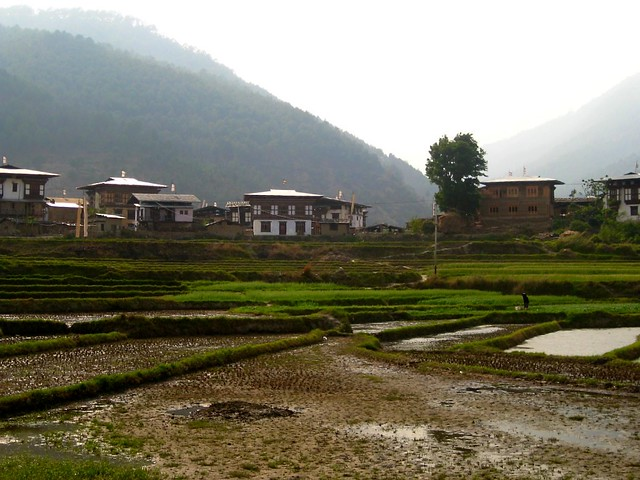 Rice Fields in Bhutan