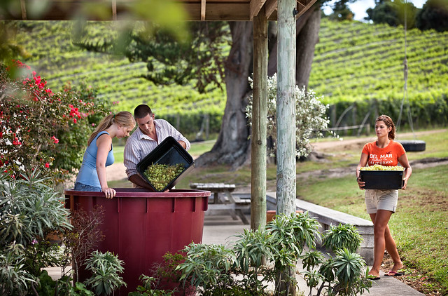 Winery Workers on Waiheke Island