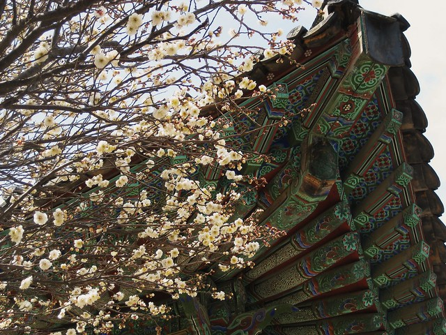 Cherry Blossoms & Temple
