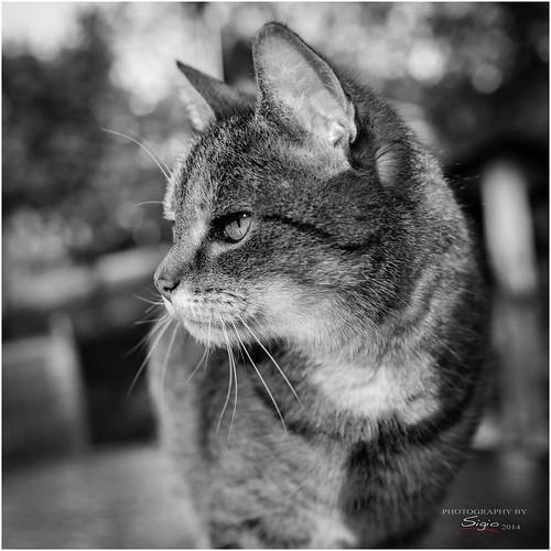 Cat ###15