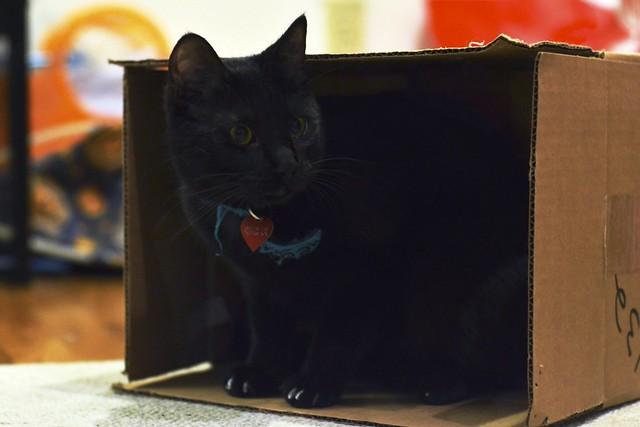 Luna has a Box