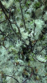mossy branches floral trade