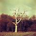 Spooky Tree (101?)
