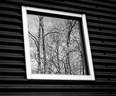 03 06 11 reflection bw