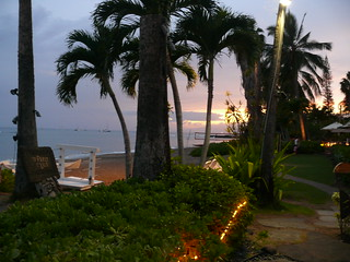 Shot of palm trees at beach edge in Lahaina, Maui, just before sunset.