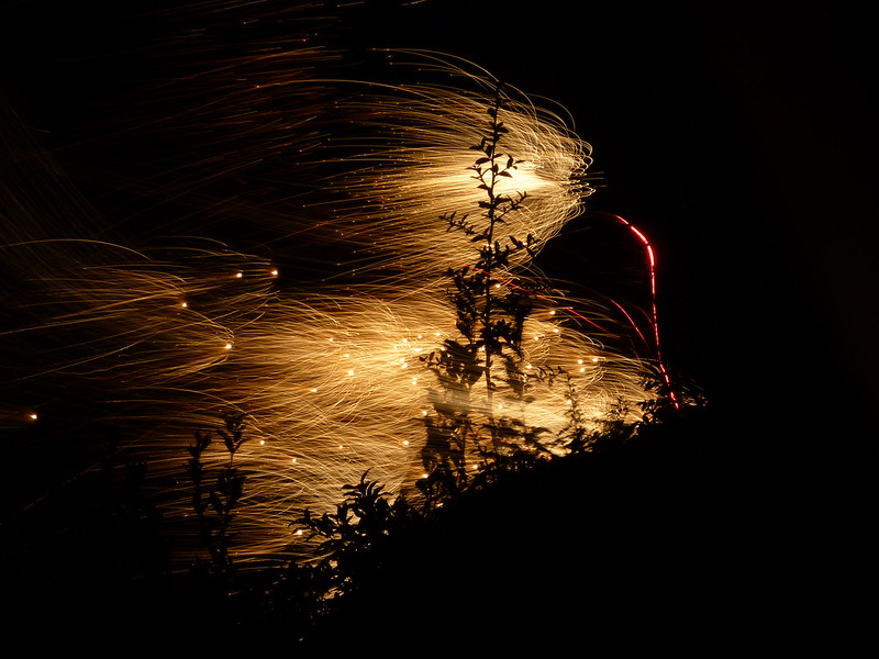 Sparkly fireworks engulfing tree