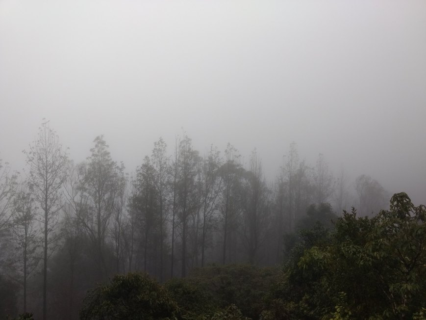 foggy mist photo trees chikmagalur