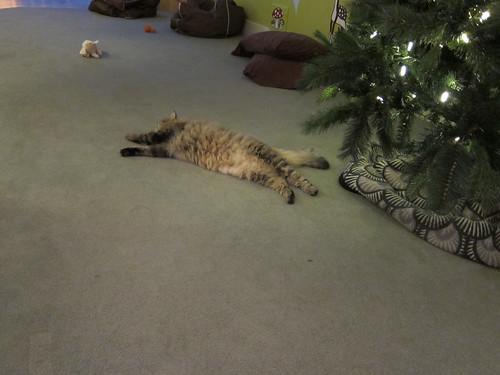 Cat Belly