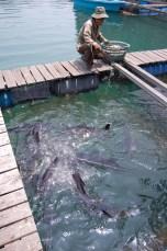 Besuch Pangasius Fischzucht 23
