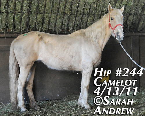 Hip #244