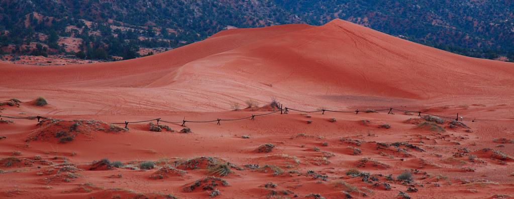 Dune rose corail dans le parc Coral Pink Sand Dunes aux États-Unis