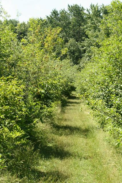 overgrown path #2