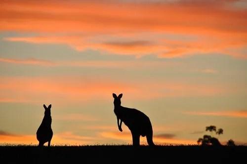 Aussie Silhouette
