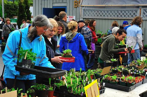 Women's Institute Plant Sale