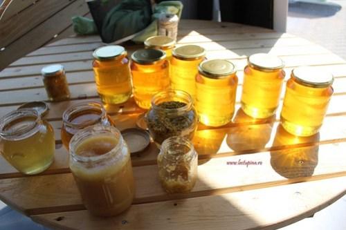 Degustare produse apicole