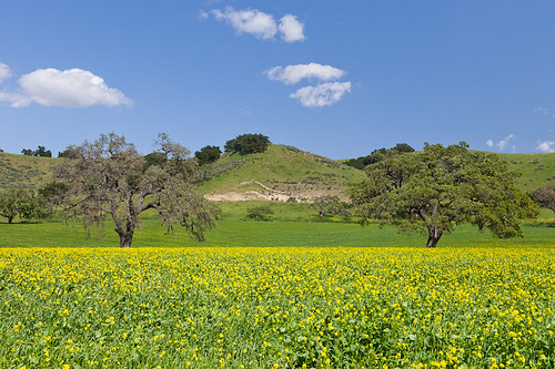 Santa Ynez Valley, California Central Coast