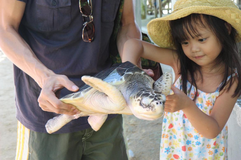 this is green tortoise (penyu ijo)