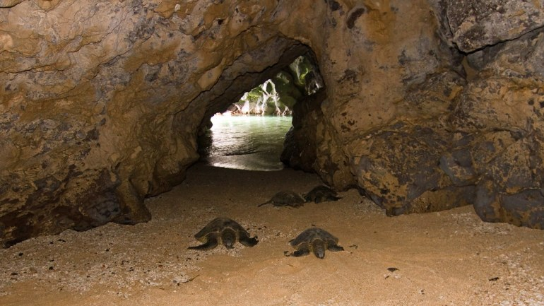 Explore caves with Ancient Kauai Excursions