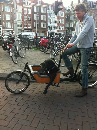 Dog chilling in a cargo bike in Amsterdam