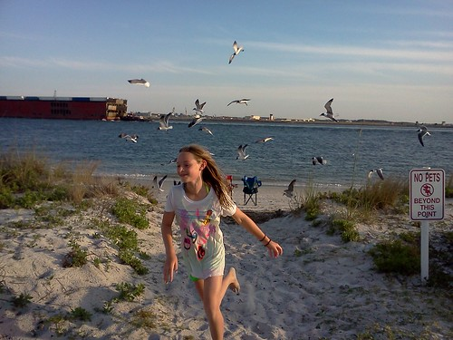 seagulls attacking Taylor